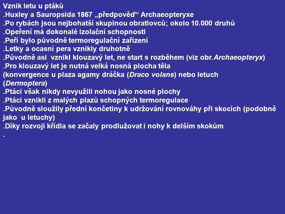 """Vznik letu u ptáků.Huxley a Sauropsida 1867 """"předpověď Archaeopteryxe.Po rybách jsou nejbohatší skupinou obratlovců; okolo 10.000 druhů.Opeření má dokonalé izolační schopnosti.Peří bylo původně termoregulační zařízení.Letky a ocasní pera vznikly druhotně.Původně asi vznikl klouzavý let, ne start s rozběhem (viz obr.Archaeopteryx).Pro klouzavý let je nutná velká nosná plocha těla (konvergence u plaza agamy dráčka (Draco volans) nebo letuch (Dermoptera).Ptáci však nikdy nevyužili nohou jako nosné plochy.Ptáci vznikli z malých plazů schopných termoregulace.Původně sloužily přední končetiny k udržování rovnováhy při skocích (podobně jako u letuchy).Díky rozvoji křídla se začaly prodlužovat i nohy k delším skokům."""