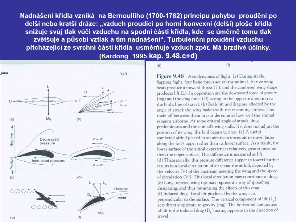 """Nadnášení křídla vzniká na Bernoulliho (1700-1782) principu pohybu proudění po delší nebo kratší dráze: """"vzduch proudící po horní konvexní (delší) ploše křídla snižuje svůj tlak vůči vzduchu na spodní části křídla, kde se úměrně tomu tlak zvětšuje a působí vztlak a tím nadnášení ."""