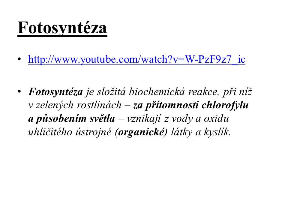 Fotosyntéza http://www.youtube.com/watch?v=W-PzF9z7_ic Fotosyntéza je složitá biochemická reakce, při níž v zelených rostlinách – za přítomnosti chlor