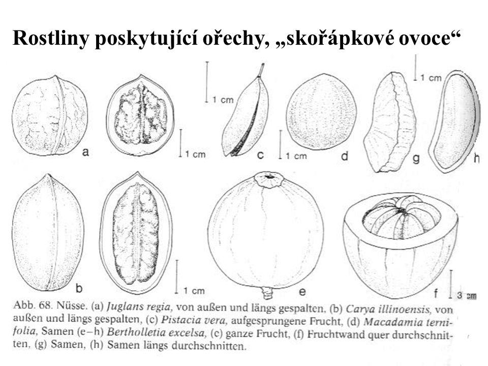 """Rostliny poskytující ořechy, """"skořápkové ovoce"""