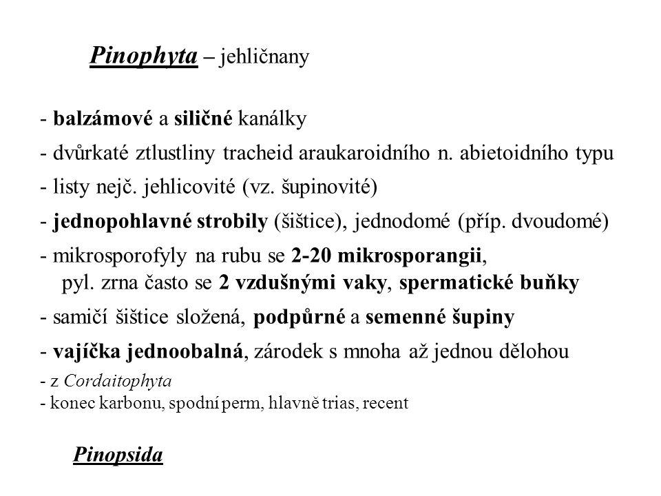 Pinophyta – jehličnany - balzámové a siličné kanálky - dvůrkaté ztlustliny tracheid araukaroidního n. abietoidního typu - listy nejč. jehlicovité (vz.
