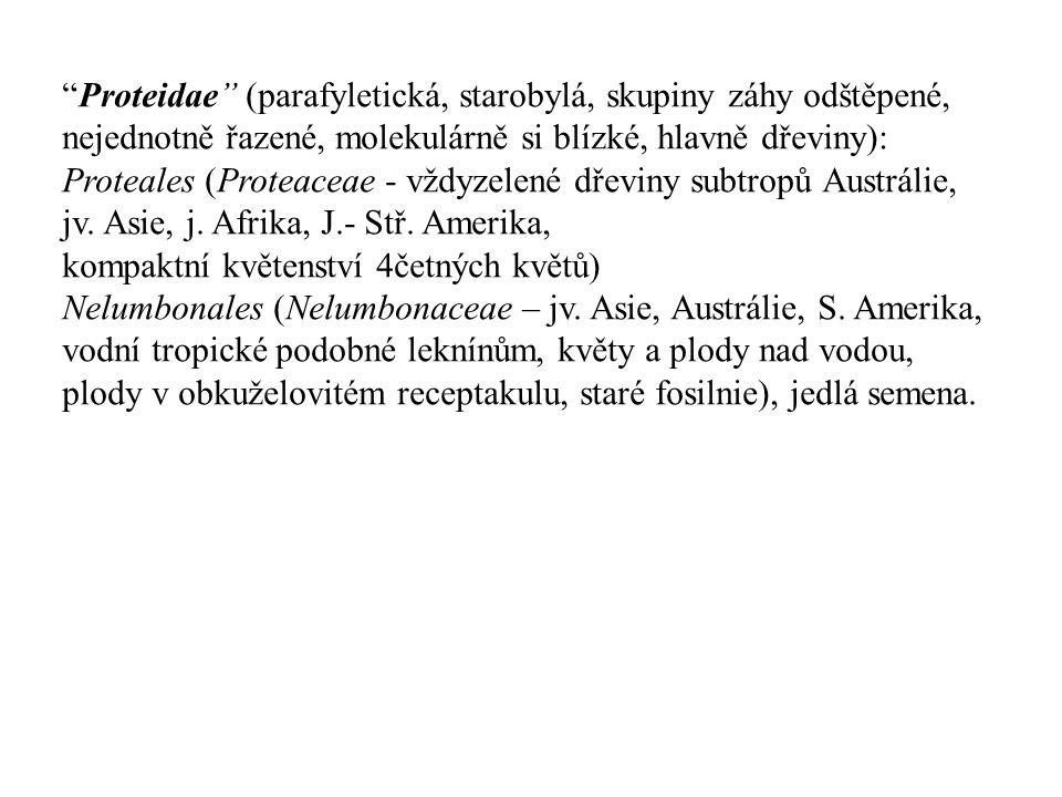 """""""Proteidae"""" (parafyletická, starobylá, skupiny záhy odštěpené, nejednotně řazené, molekulárně si blízké, hlavně dřeviny): Proteales (Proteaceae - vždy"""
