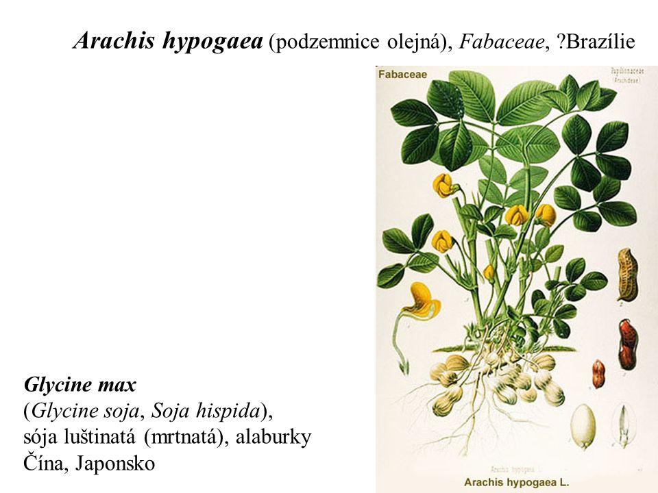 Arachis hypogaea (podzemnice olejná), Fabaceae, ?Brazílie Glycine max (Glycine soja, Soja hispida), sója luštinatá (mrtnatá), alaburky Čína, Japonsko
