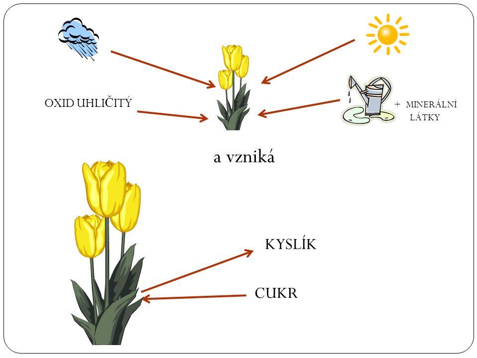 Fotosyntéza je p ř em ě na látek anorganických (oxidu uhli č itého a vody s minerálními látkami) na organické látky (cukry a dále na tuky, bílkoviny)