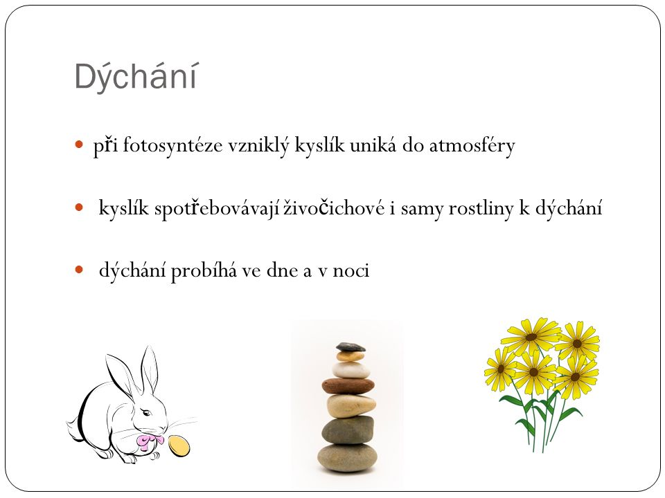 Dýchání probíhá jen ve dne a fotosyntéza v noci.