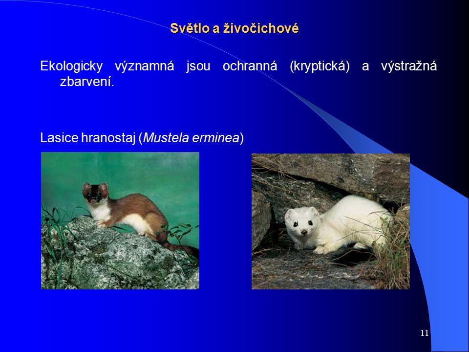 11 Světlo a živočichové Ekologicky významná jsou ochranná (kryptická) a výstražná zbarvení. Lasice hranostaj (Mustela erminea)