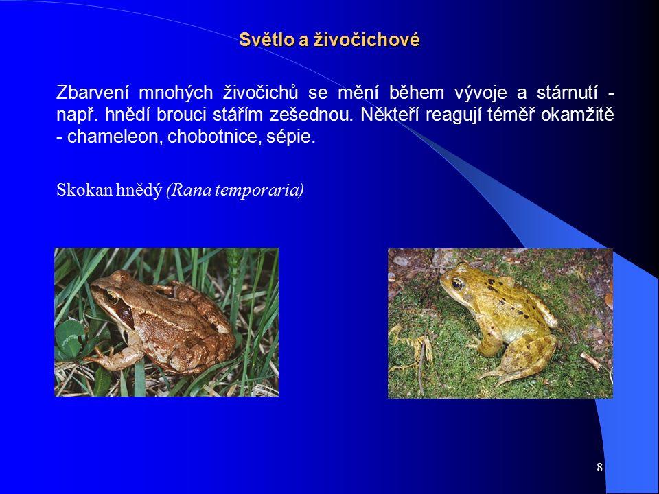19 Fotoperiodismus Hlavní příčinou sezónní periodicity života živočichů jsou změny v délce světelné části dne – fotoperiody.