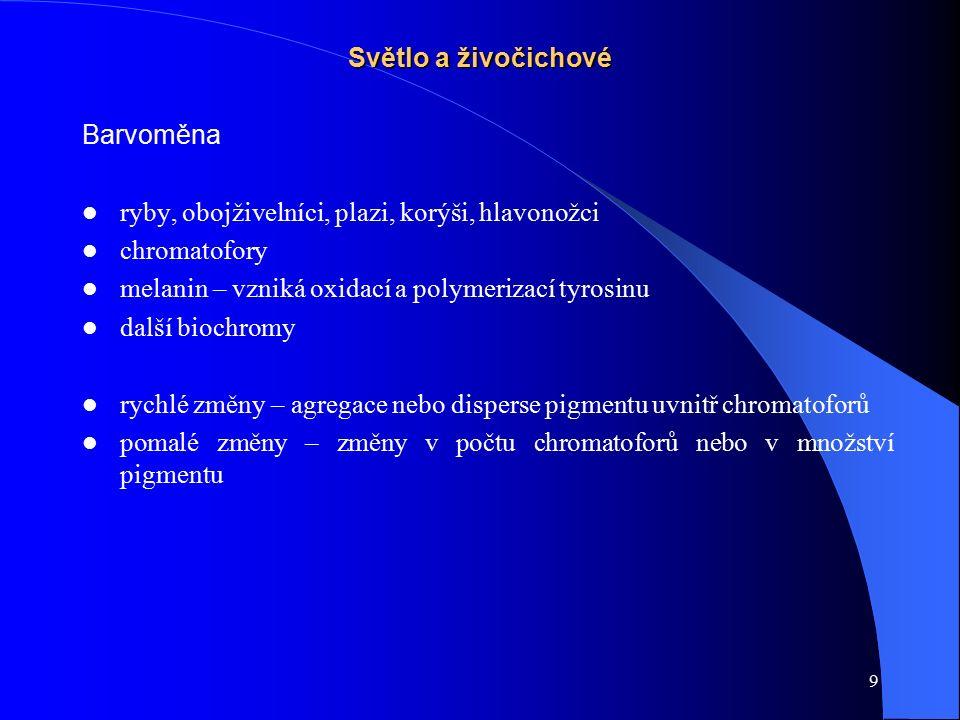 20 Fotoperiodismus Dormance: kviescence diapauza hibernace estivace