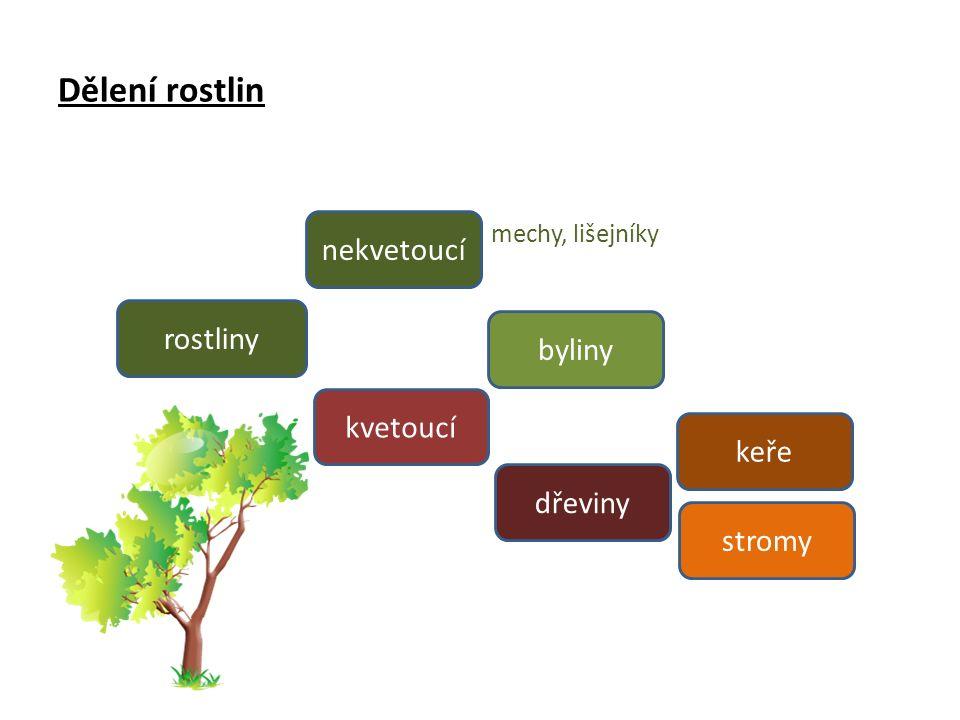 Dýchání rostlin Rostliny spotřebovávají při dýchání kyslík a vylučují oxid uhličitý.