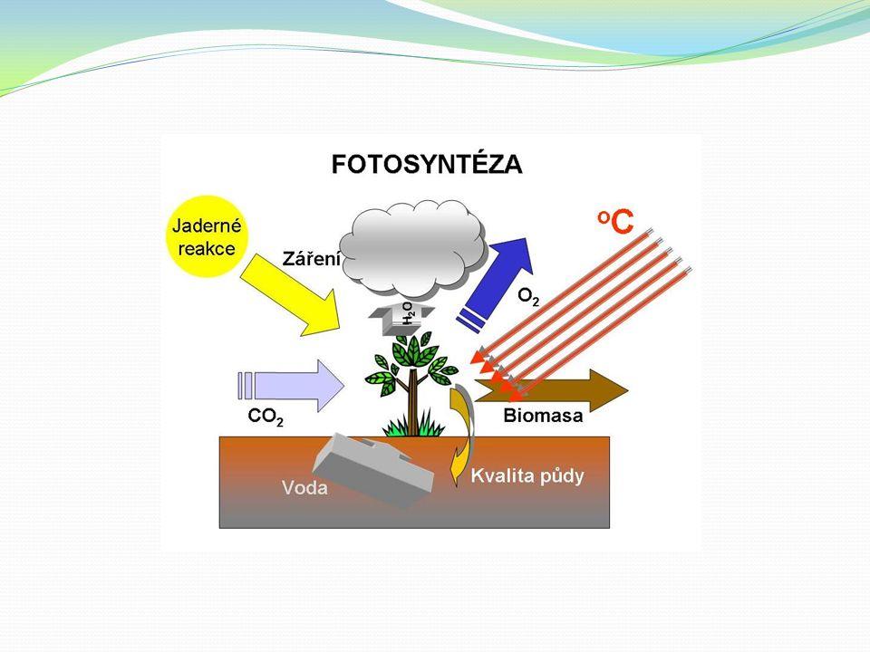 Dýchání soubor katabolických reakcí, kterými rostlina uvolňuje energii z organických sloučenin uvolněná energie je spotřebována na krytí energetických požadavků hlavním substrátem pro respiraci jsou jednoduché cukry, např.