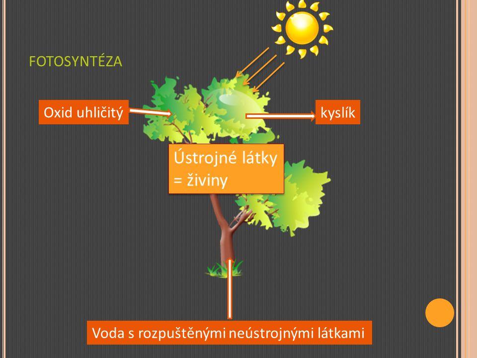 FOTOSYNTÉZA Oxid uhličitý + voda → ústrojné látky + kyslík Probíhá v listech za přítomnosti: Světla a tepla Zeleného listového barviva