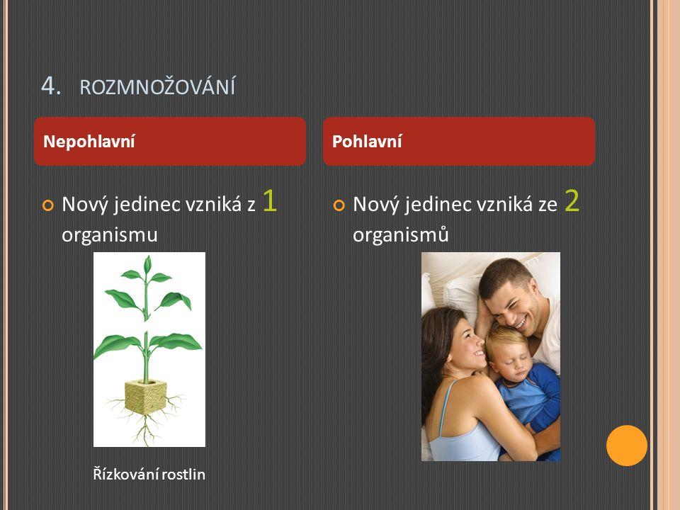 4. ROZMNOŽOVÁNÍ Nový jedinec vzniká z 1 organismu Nový jedinec vzniká ze 2 organismů NepohlavníPohlavní Řízkování rostlin
