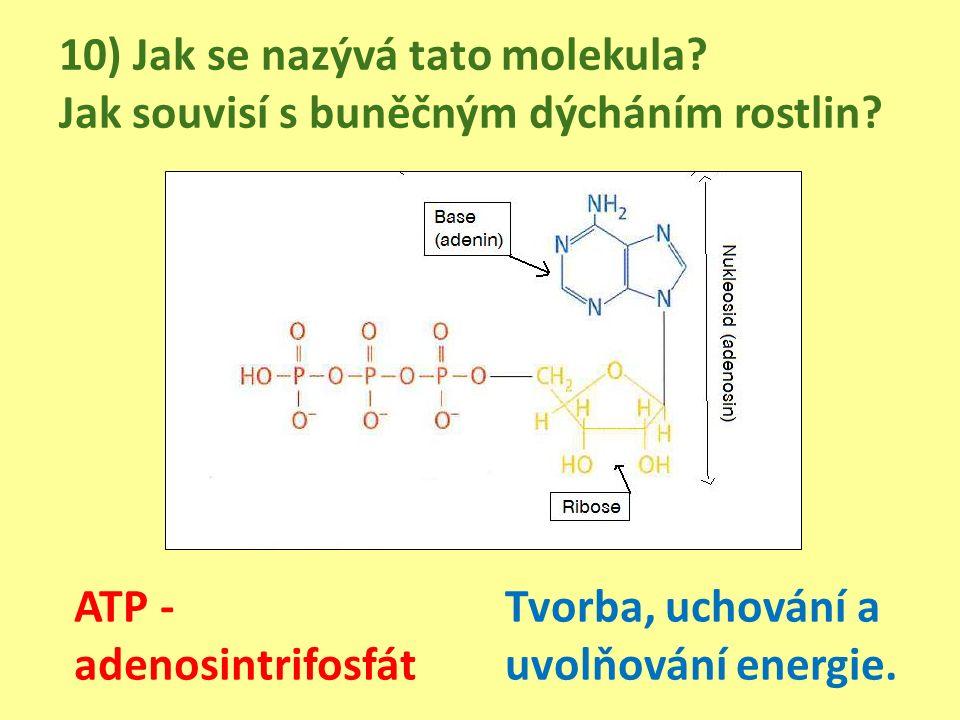 10) Jak se nazývá tato molekula. Jak souvisí s buněčným dýcháním rostlin.