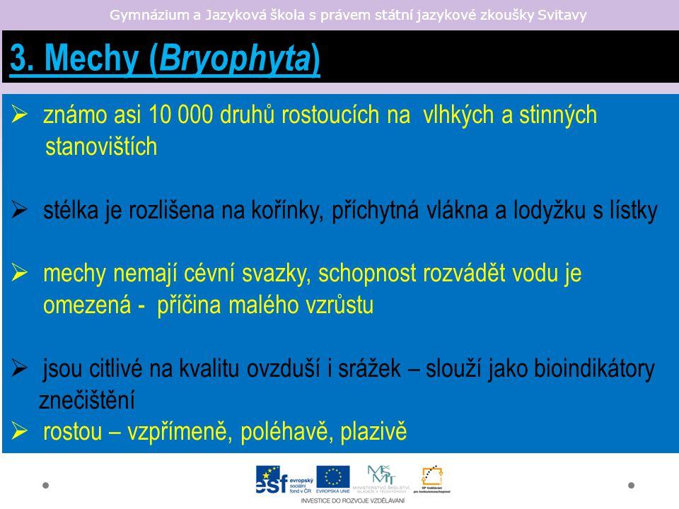 3. Mechy ( Bryophyta )  známo asi 10 000 druhů rostoucích na vlhkých a stinných stanovištích  stélka je rozlišena na kořínky, příchytná vlákna a lod