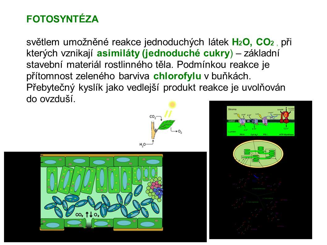FOTOSYNTÉZA světlem umožněné reakce jednoduchých látek H 2 O, CO 2, při kterých vznikají asimiláty (jednoduché cukry) – základní stavební materiál rostlinného těla.