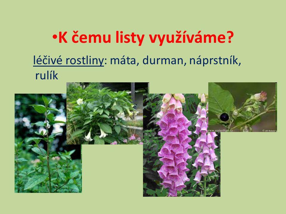  léčivé rostliny: máta, durman, náprstník, rulík K čemu listy využíváme