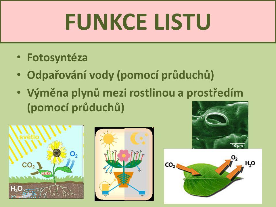 FUNKCE LISTU Fotosyntéza Odpařování vody (pomocí průduchů) Výměna plynů mezi rostlinou a prostředím (pomocí průduchů) List3