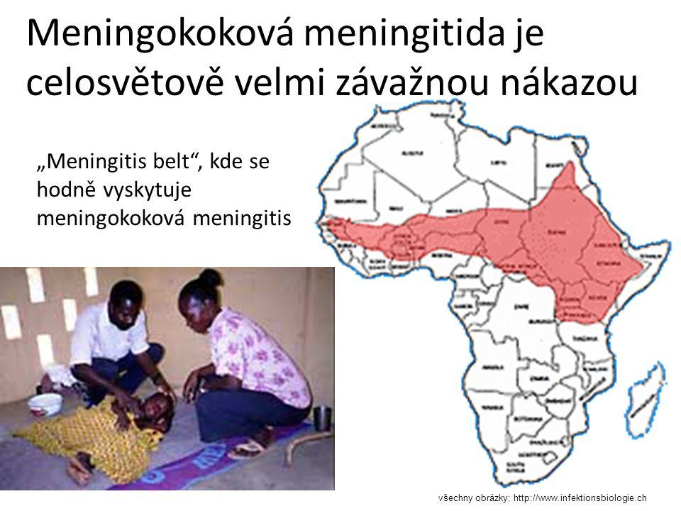 """Meningokoková meningitida je celosvětově velmi závažnou nákazou """"Meningitis belt , kde se hodně vyskytuje meningokoková meningitis všechny obrázky: http://www.infektionsbiologie.ch"""