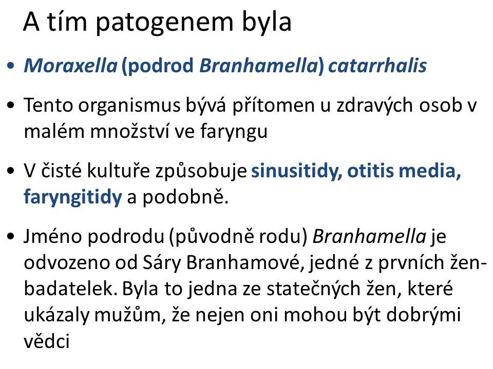 A tím patogenem byla Moraxella (podrod Branhamella) catarrhalis Tento organismus bývá přítomen u zdravých osob v malém množství ve faryngu V čisté kul