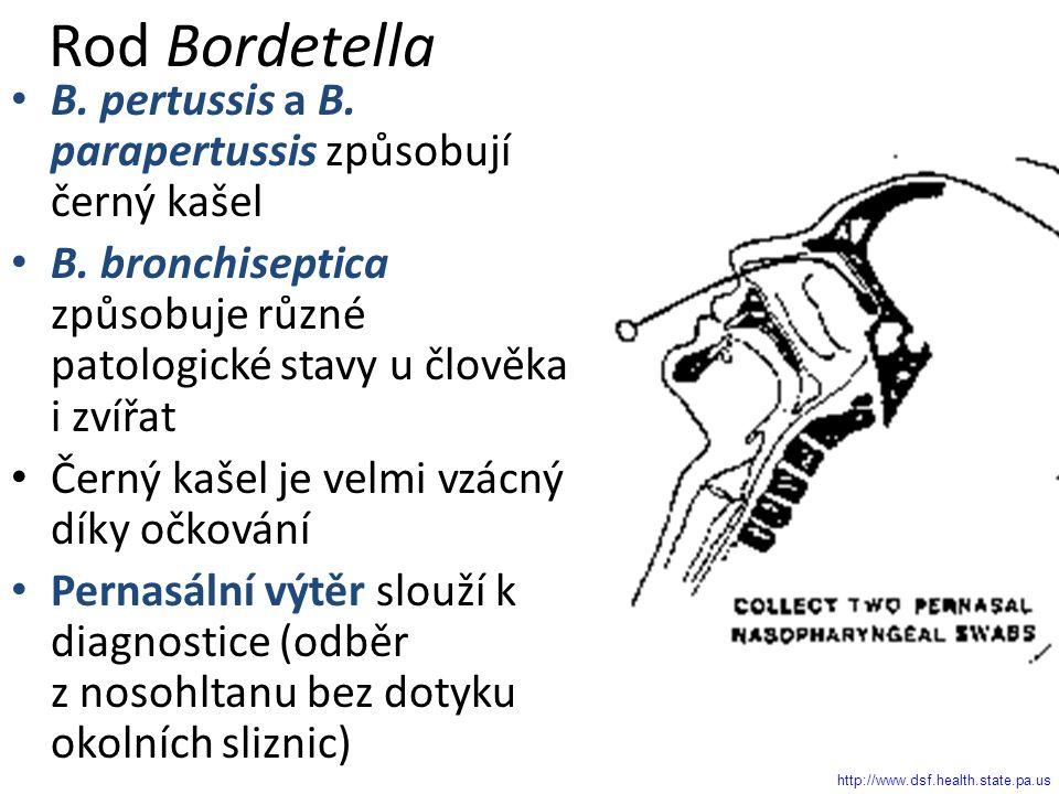 Rod Bordetella B. pertussis a B. parapertussis způsobují černý kašel B.