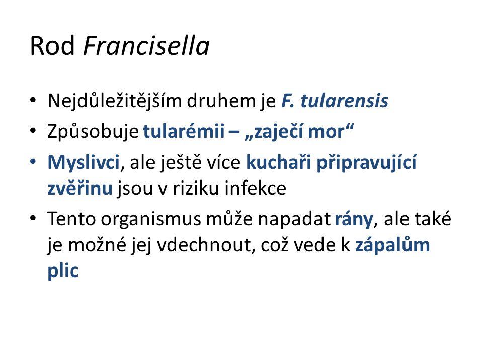 Rod Francisella Nejdůležitějším druhem je F.