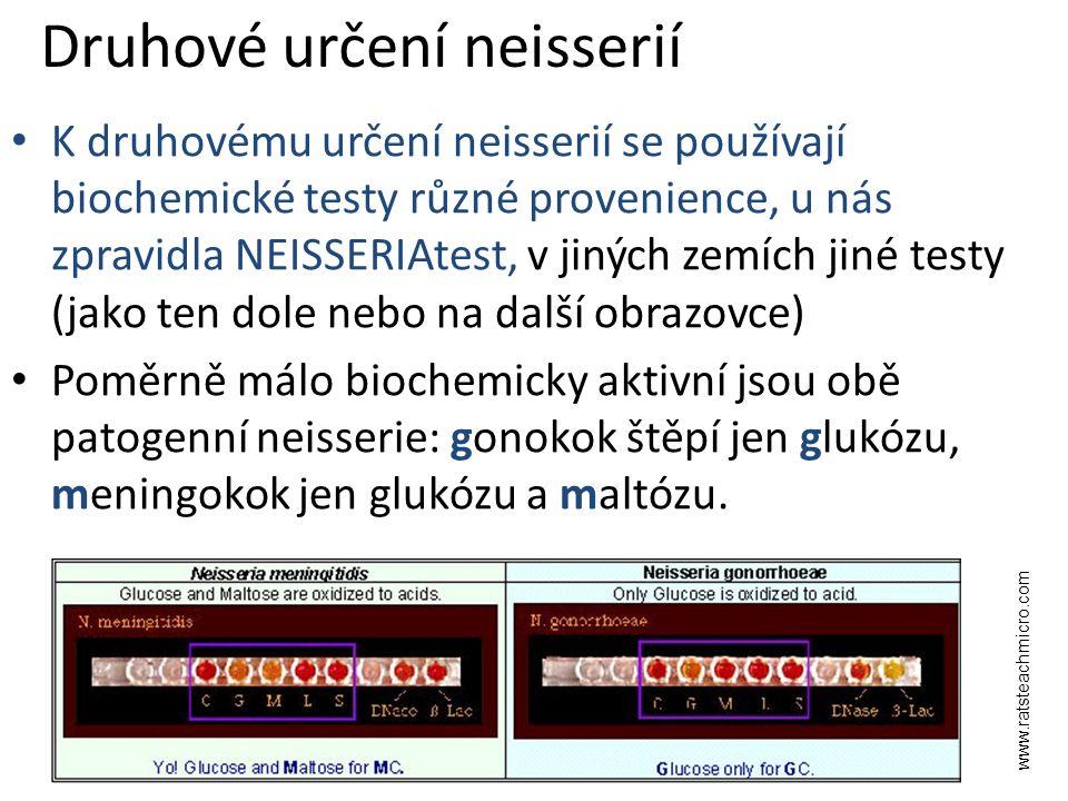 Druhové určení neisserií K druhovému určení neisserií se používají biochemické testy různé provenience, u nás zpravidla NEISSERIAtest, v jiných zemích jiné testy (jako ten dole nebo na další obrazovce) Poměrně málo biochemicky aktivní jsou obě patogenní neisserie: gonokok štěpí jen glukózu, meningokok jen glukózu a maltózu.