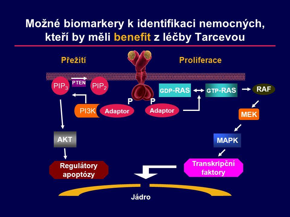 Možné biomarkery k identifikaci nemocných, kteří by měli benefit z léčby Tarcevou PP Jádro Adaptor Transkripční faktory MAPK MEK RAF GTP -RAS GDP -RAS Proliferace Adaptor Přežití PIP 2 PI3K PIP 3 PTEN AKT Regulátory apoptózy