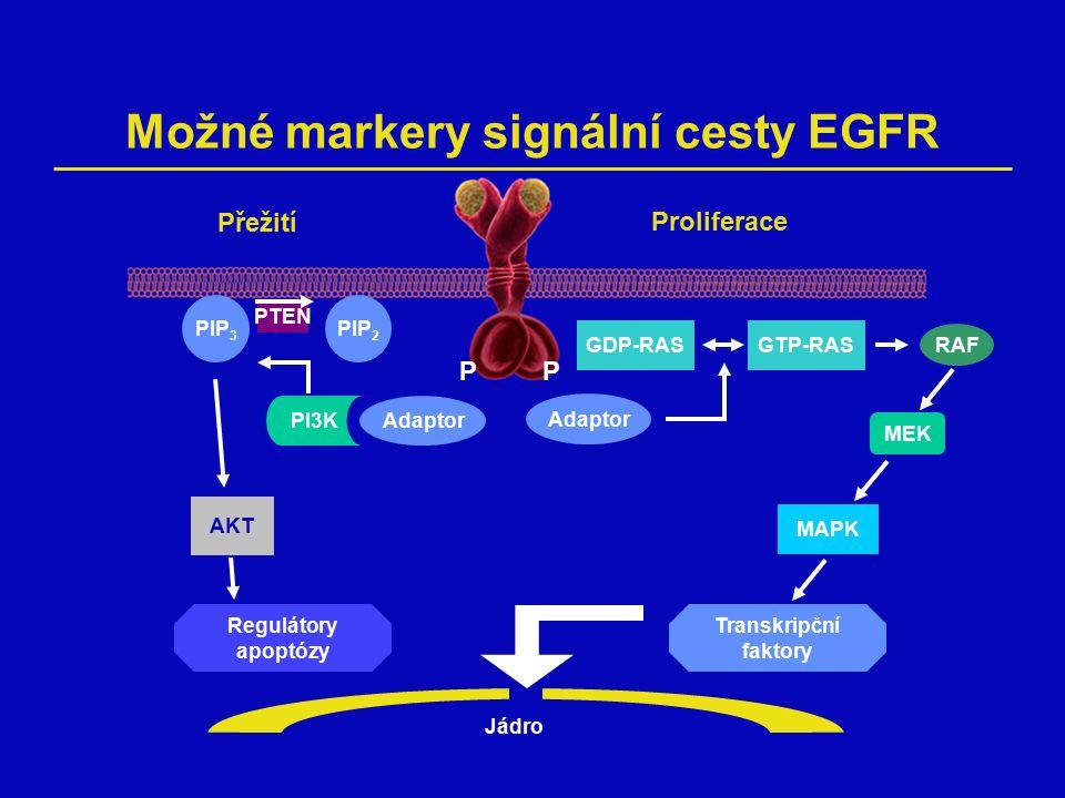 Možné markery signální cesty EGFR PP Adaptor Transkripční faktory Jádro MAPK MEK RAF GTP-RASGDP-RAS Proliferace Přežití PIP 2 PI3K PIP 3 PTEN AKT Regulátory apoptózy