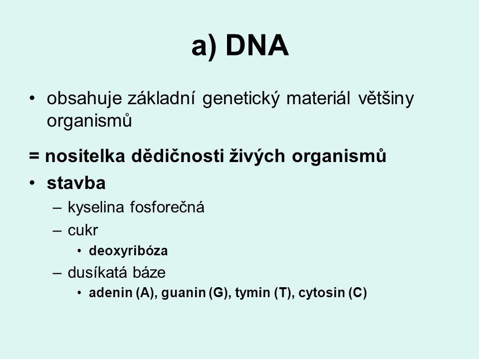 a) DNA obsahuje základní genetický materiál většiny organismů = nositelka dědičnosti živých organismů stavba –kyselina fosforečná –cukr deoxyribóza –dusíkatá báze adenin (A), guanin (G), tymin (T), cytosin (C)