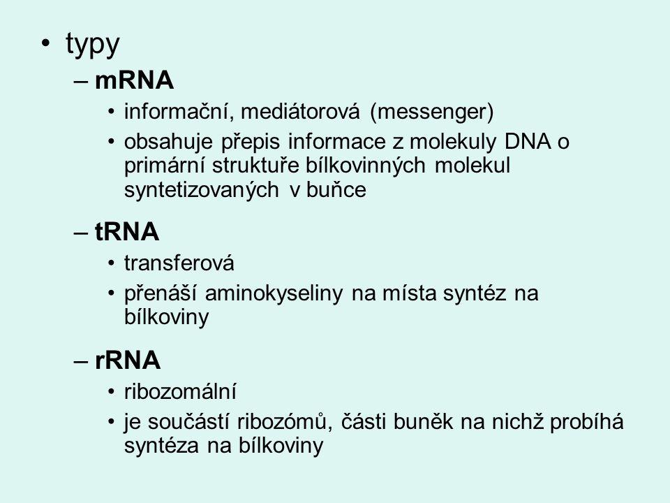 typy –mRNA informační, mediátorová (messenger) obsahuje přepis informace z molekuly DNA o primární struktuře bílkovinných molekul syntetizovaných v buňce –tRNA transferová přenáší aminokyseliny na místa syntéz na bílkoviny –rRNA ribozomální je součástí ribozómů, části buněk na nichž probíhá syntéza na bílkoviny