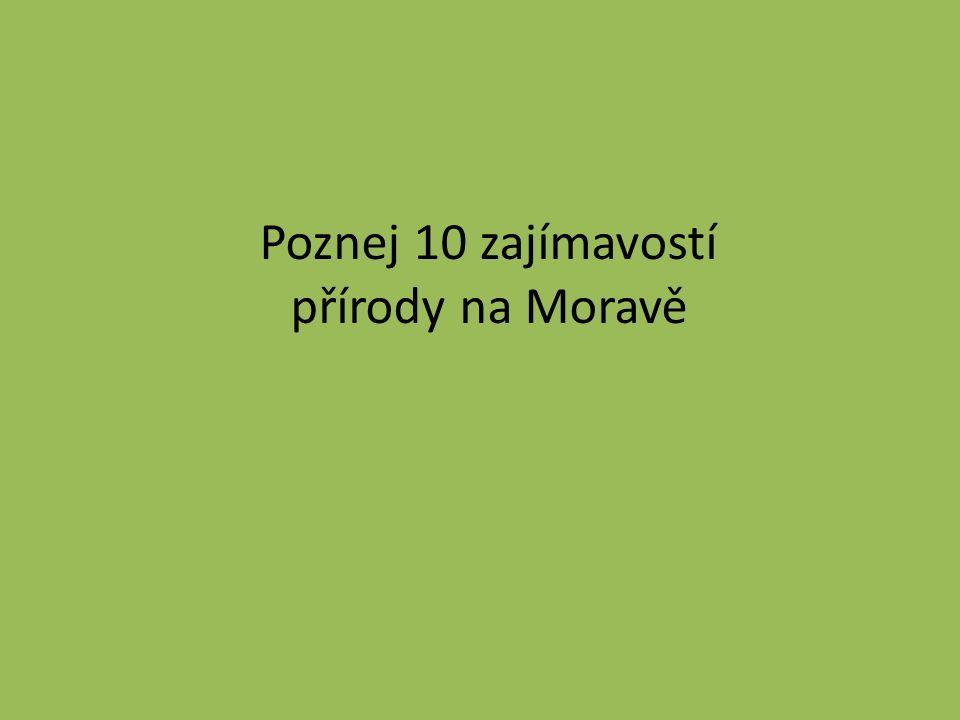 Poznej 10 zajímavostí přírody na Moravě