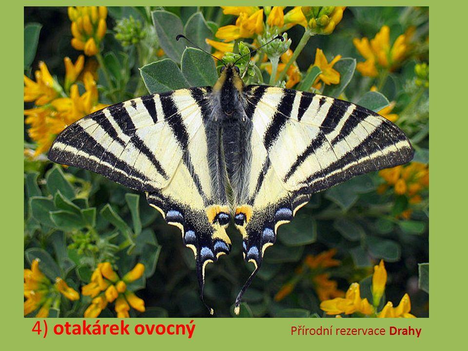 5) střevíčník pantoflíček Národní přírodní rezervace Strabišov-Oulehla