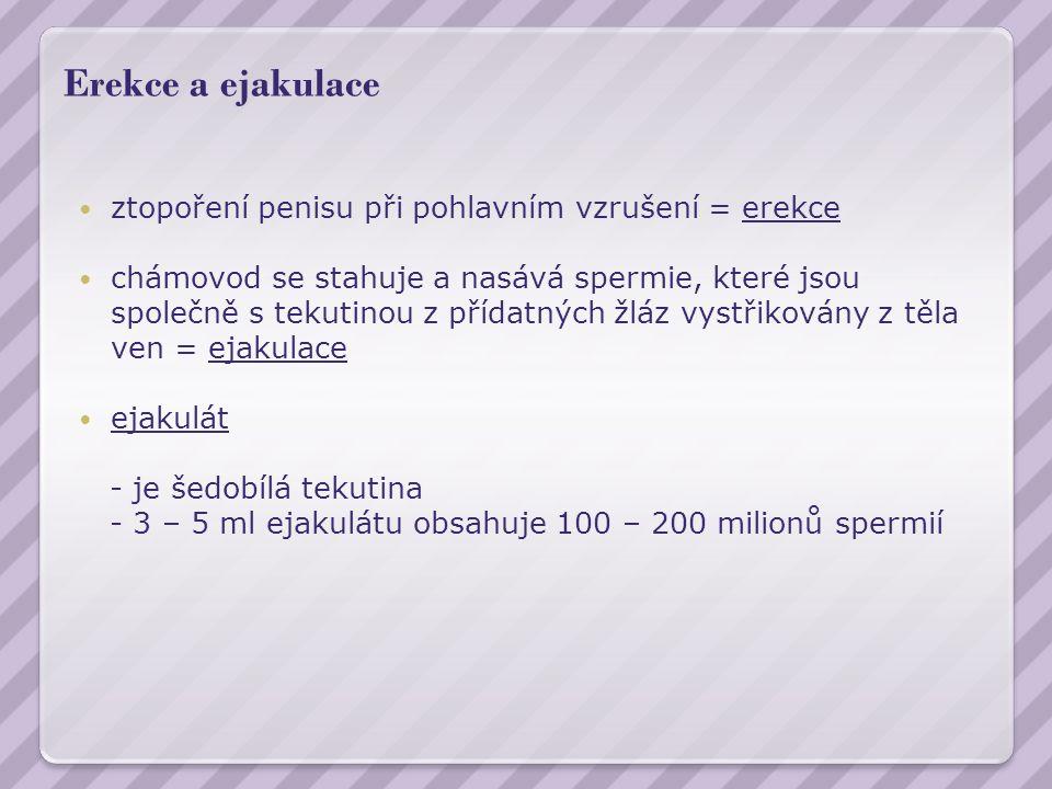 Erekce a ejakulace ztopoření penisu při pohlavním vzrušení = erekce chámovod se stahuje a nasává spermie, které jsou společně s tekutinou z přídatných žláz vystřikovány z těla ven = ejakulace ejakulát - je šedobílá tekutina - 3 – 5 ml ejakulátu obsahuje 100 – 200 milionů spermií