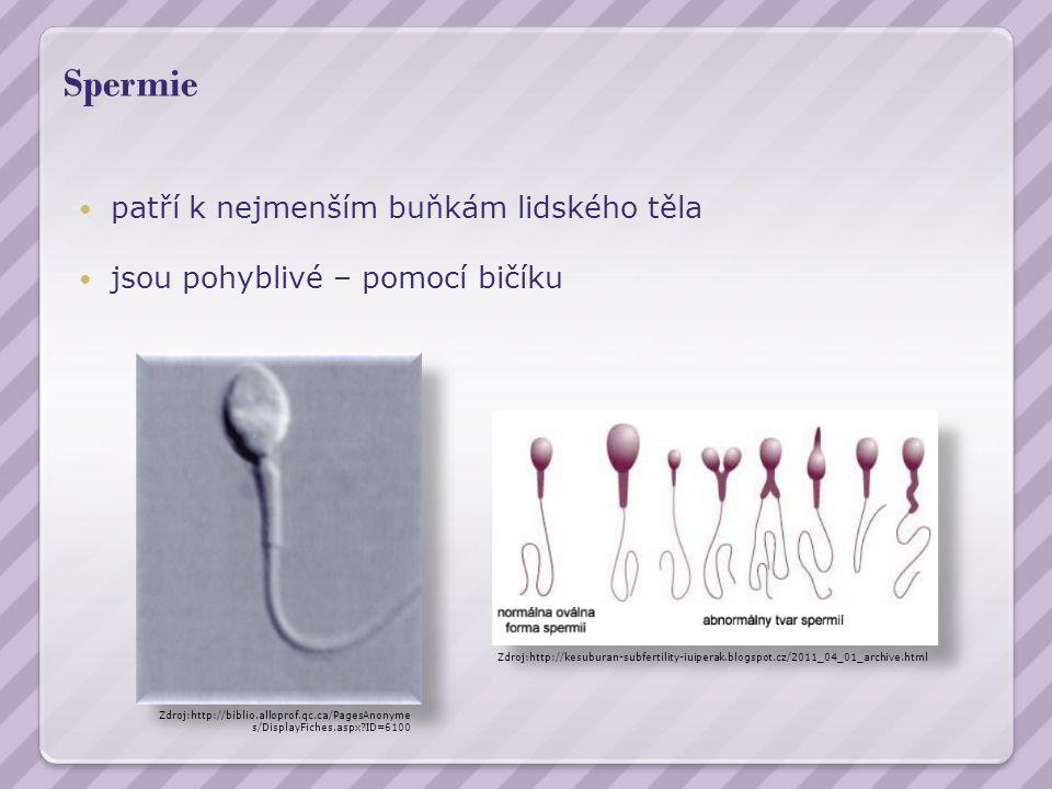 Spermie patří k nejmenším buňkám lidského těla jsou pohyblivé – pomocí bičíku Zdroj:http://biblio.alloprof.qc.ca/PagesAnonyme s/DisplayFiches.aspx ID=6100 Zdroj:http://kesuburan-subfertility-iuiperak.blogspot.cz/2011_04_01_archive.html