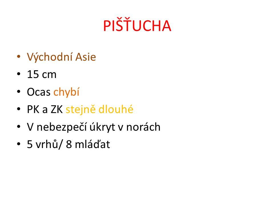 PIŠŤUCHA Východní Asie 15 cm Ocas chybí PK a ZK stejně dlouhé V nebezpečí úkryt v norách 5 vrhů/ 8 mláďat