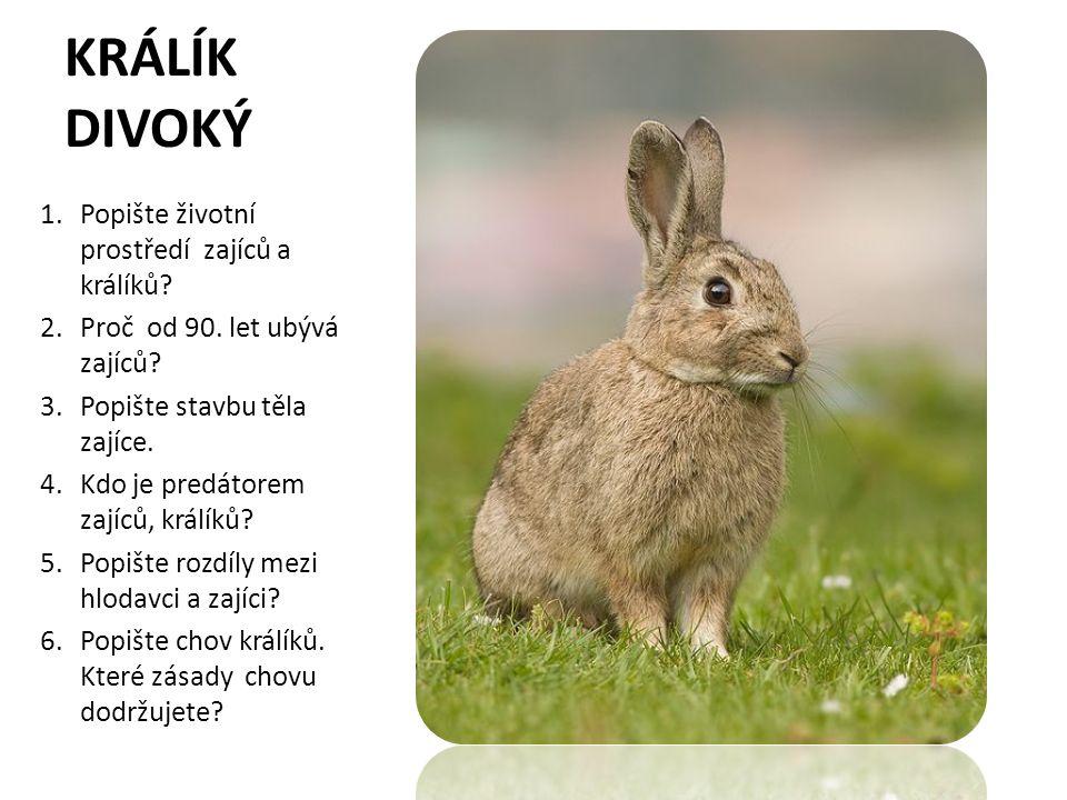 KRÁLÍK DIVOKÝ 1.Popište životní prostředí zajíců a králíků? 2.Proč od 90. let ubývá zajíců? 3.Popište stavbu těla zajíce. 4.Kdo je predátorem zajíců,