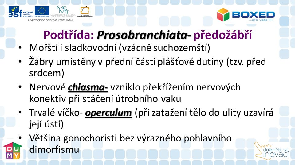 Prosobranchiata- Podtřída: Prosobranchiata- předožábří Mořští i sladkovodní (vzácně suchozemští) Žábry umístěny v přední části plášťové dutiny (tzv.