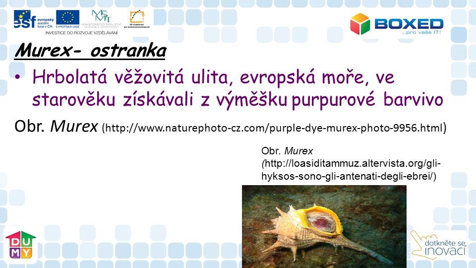 Murex- ostranka Hrbolatá věžovitá ulita, evropská moře, ve starověku získávali z výměšku purpurové barvivo Obr.
