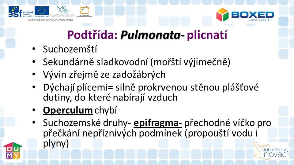 Pulmonata- Podtřída: Pulmonata- plicnatí Suchozemští Sekundárně sladkovodní (mořští výjimečně) Vývin zřejmě ze zadožábrých Dýchají plícemi= silně prokrvenou stěnou plášťové dutiny, do které nabírají vzduch Operculum chybí Suchozemské druhy- epifragma- přechodné víčko pro přečkání nepříznivých podmínek (propouští vodu i plyny)