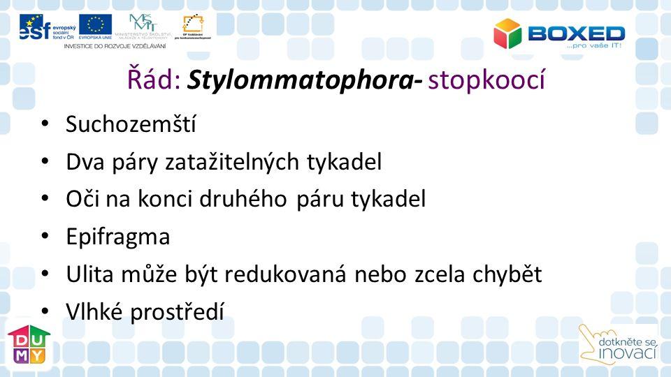 Řád: Stylommatophora- stopkoocí Suchozemští Dva páry zatažitelných tykadel Oči na konci druhého páru tykadel Epifragma Ulita může být redukovaná nebo zcela chybět Vlhké prostředí