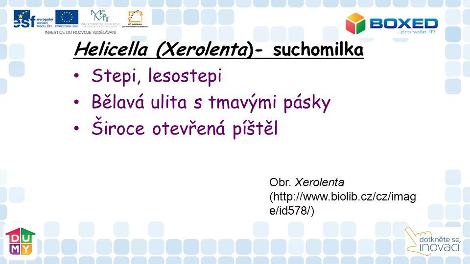 Helicella (Xerolenta)- suchomilka Stepi, lesostepi Bělavá ulita s tmavými pásky Široce otevřená píštěl Obr.