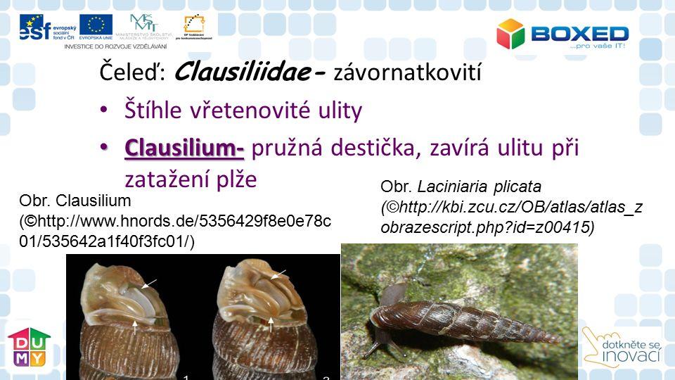 Čeleď: Clausiliidae- závornatkovití Štíhle vřetenovité ulity Clausilium- Clausilium- pružná destička, zavírá ulitu při zatažení plže Obr.