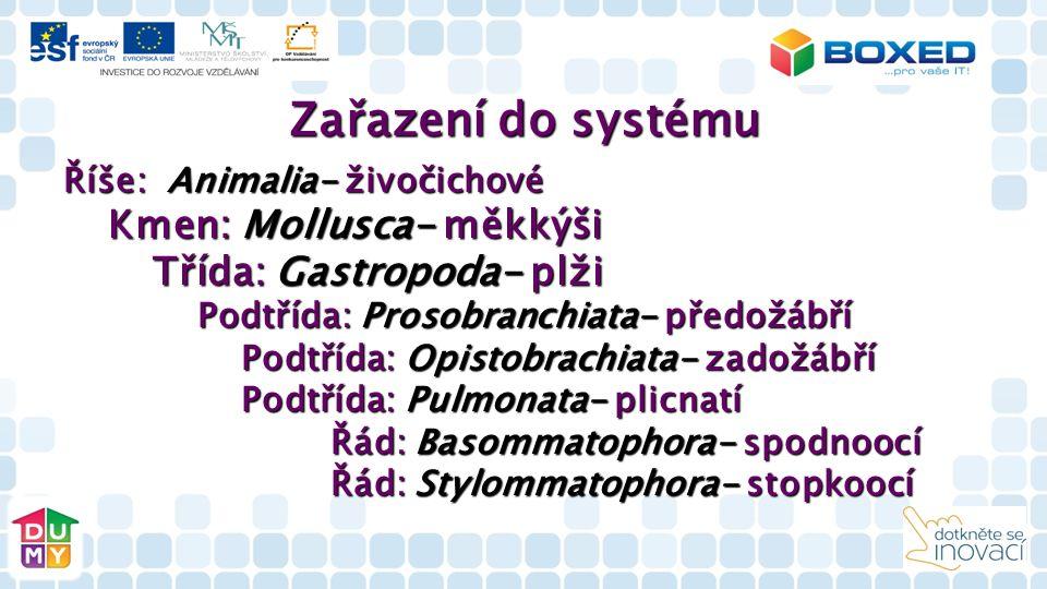 Zařazení do systému Říše: Animalia- živočichové Kmen: Mollusca- měkkýši Kmen: Mollusca- měkkýši Třída: Gastropoda- plži Třída: Gastropoda- plži Podtřída: Prosobranchiata- předožábří Podtřída: Prosobranchiata- předožábří Podtřída: Opistobrachiata- zadožábří Podtřída: Opistobrachiata- zadožábří Podtřída: Pulmonata- plicnatí Podtřída: Pulmonata- plicnatí Řád: Basommatophora- spodnoocí Řád: Basommatophora- spodnoocí Řád: Stylommatophora- stopkoocí Řád: Stylommatophora- stopkoocí