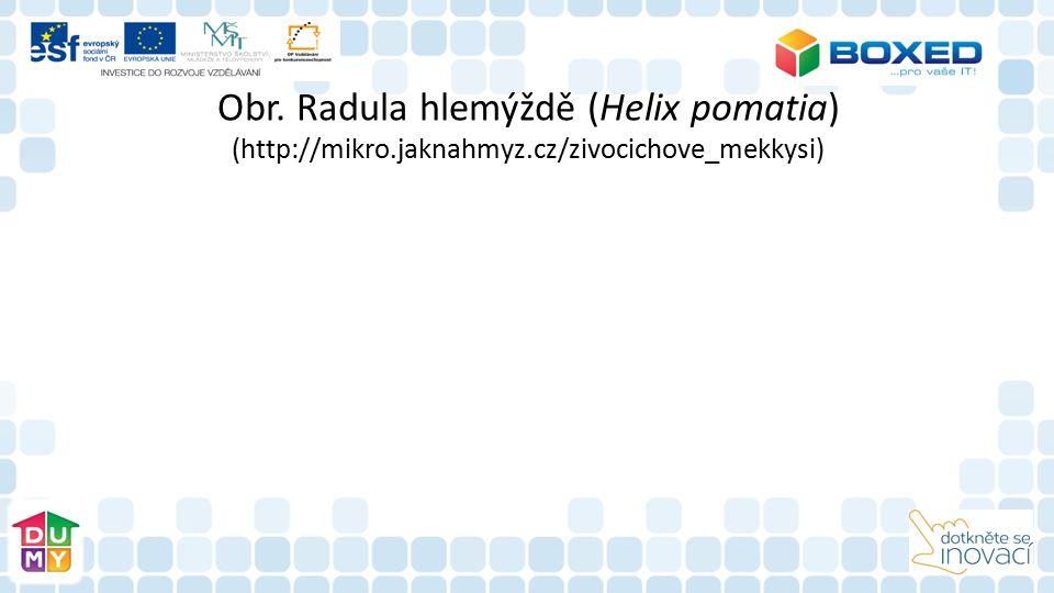 Obr. Radula hlemýždě (Helix pomatia) (http://mikro.jaknahmyz.cz/zivocichove_mekkysi)