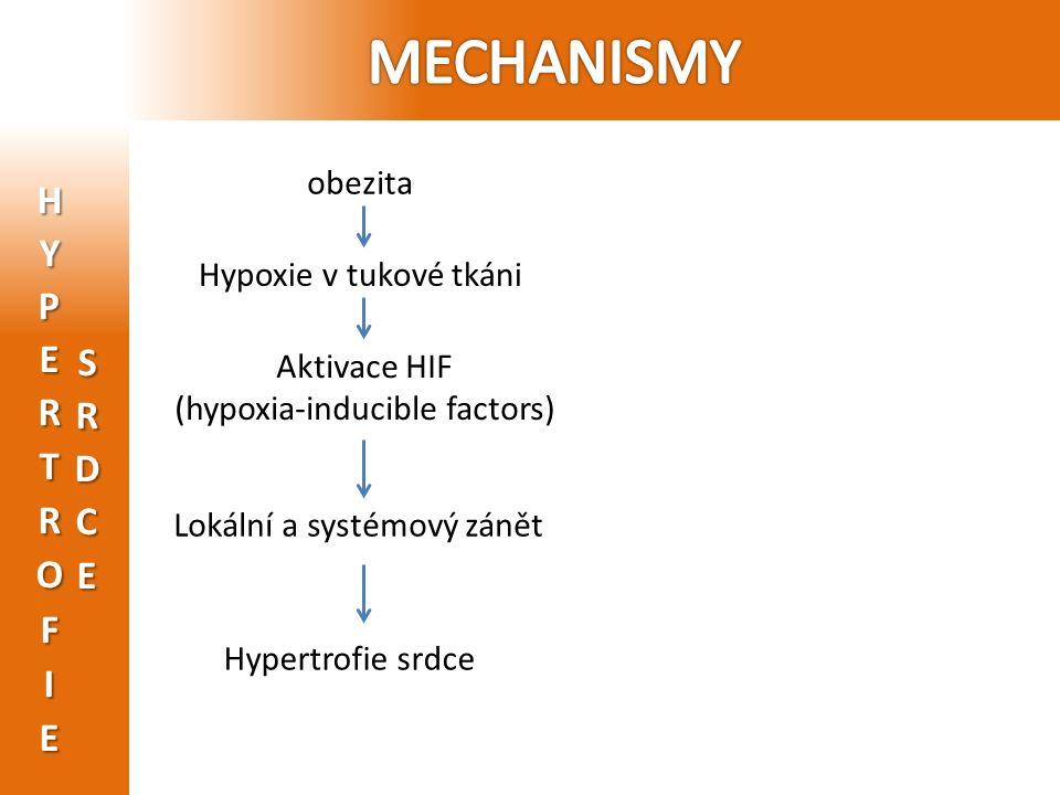 obezita Hypoxie v tukové tkáni Aktivace HIF (hypoxia-inducible factors) Lokální a systémový zánět Hypertrofie srdce