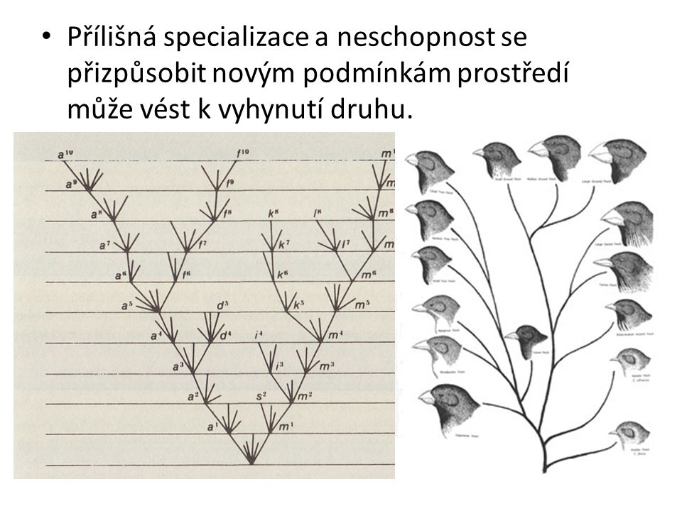 Přílišná specializace a neschopnost se přizpůsobit novým podmínkám prostředí může vést k vyhynutí druhu.