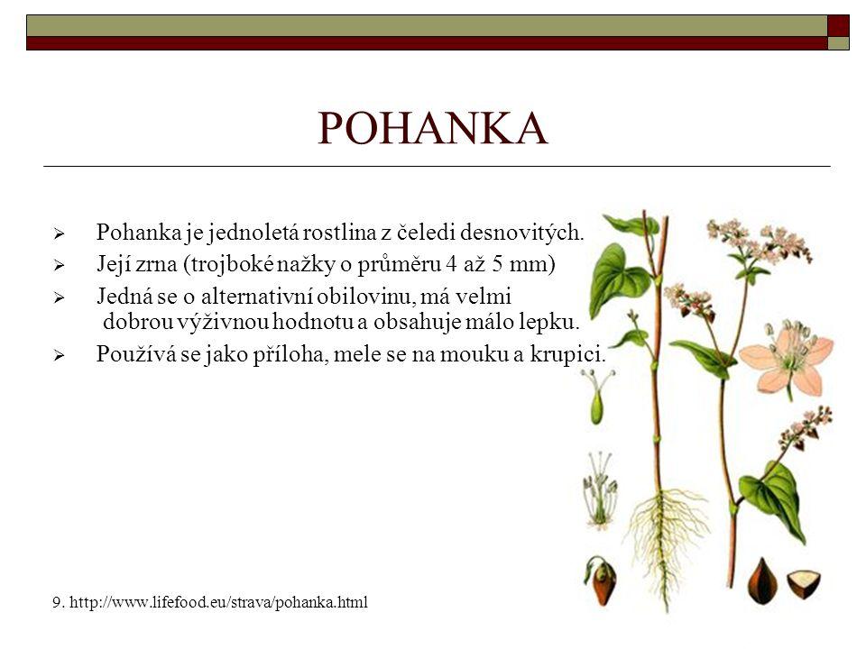 POHANKA  Pohanka je jednoletá rostlina z čeledi desnovitých.