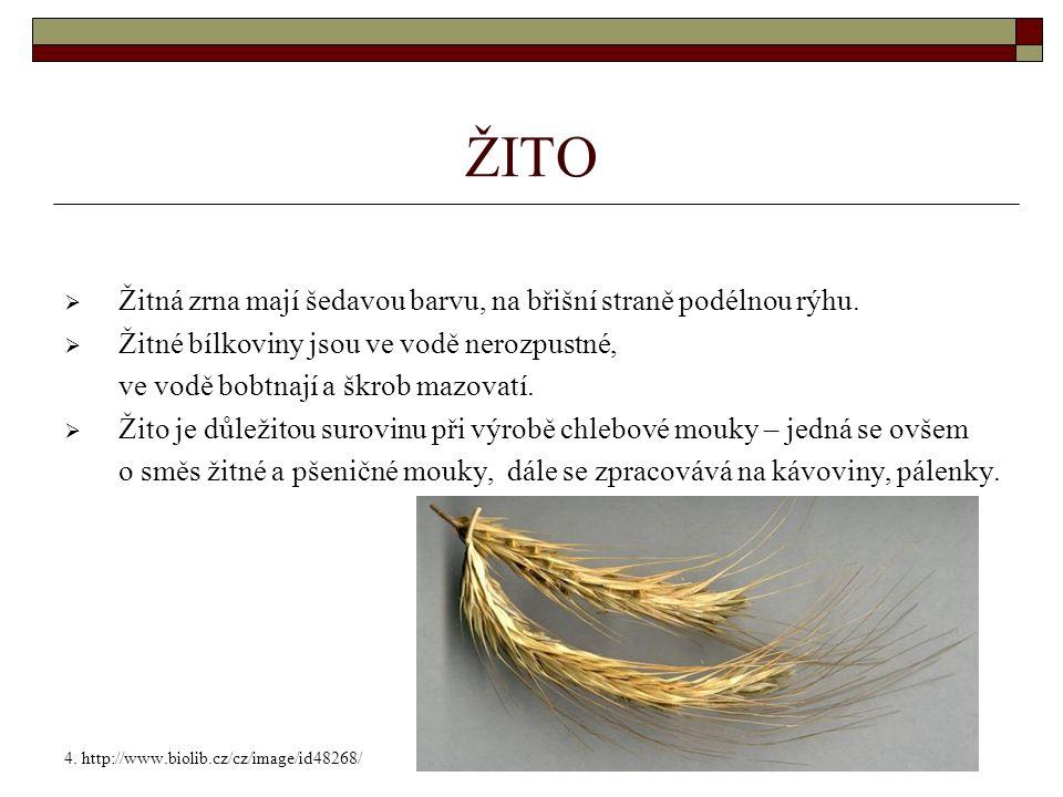 ŽITO  Žitná zrna mají šedavou barvu, na břišní straně podélnou rýhu.