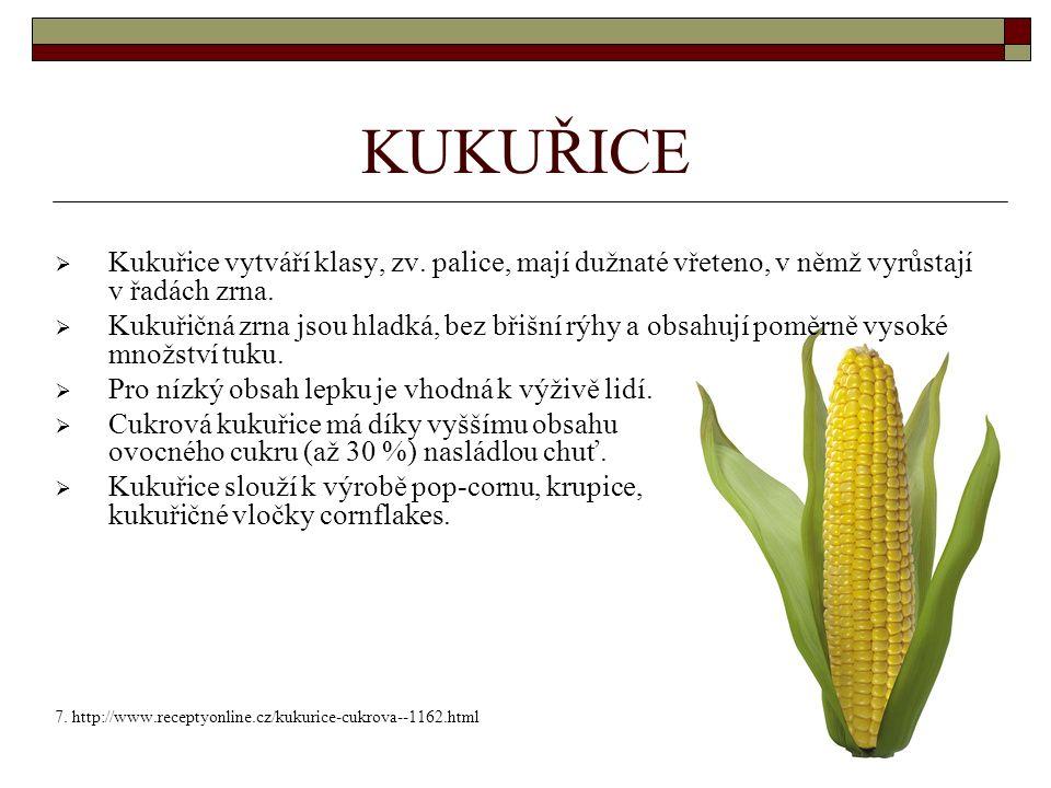 KUKUŘICE  Kukuřice vytváří klasy, zv.