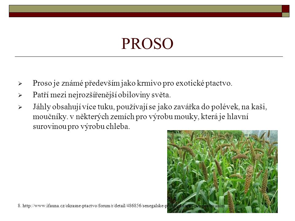 PROSO  Proso je známé především jako krmivo pro exotické ptactvo.